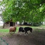 Gite de la Métairie - Votre mariage en Sarthe - Les toy horses