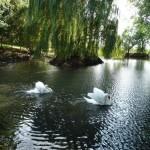 Gite de la Métairie - Votre mariage en Sarthe - Le plan d'eau sécurisé